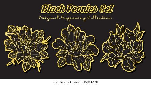 Vector Black Peonies Set Original Engraving Flowers Collection