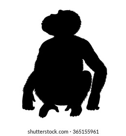 Vector black silhouette of a chimpanzee, sitting and looking up. Front view. Isolated on white.