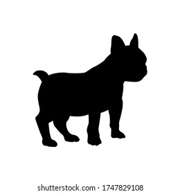 Vector black silhouette of french bulldog isolated on white background