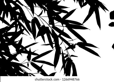 Vector black silhouettes of tropical leaves, palms, trees, foliage. Design elements of tropical nature. Stylized images and simple shapes for logos and natural decor