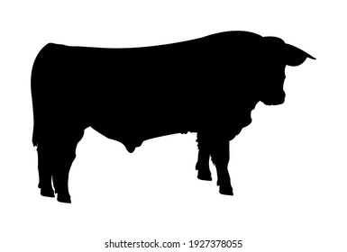 Vector black simple silhouette of a cow, cattle, or bull isolated on white background. Illustration of a farm animal, livestock.