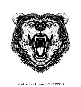 Vector Black and White Bear Head Illustration