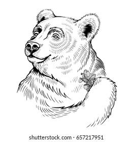 Vector Black and White Bear Illustration