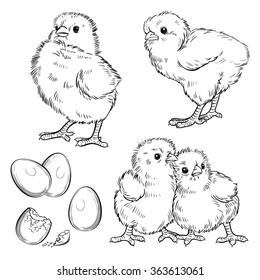 Vector Black and White Chickens Set Illustration