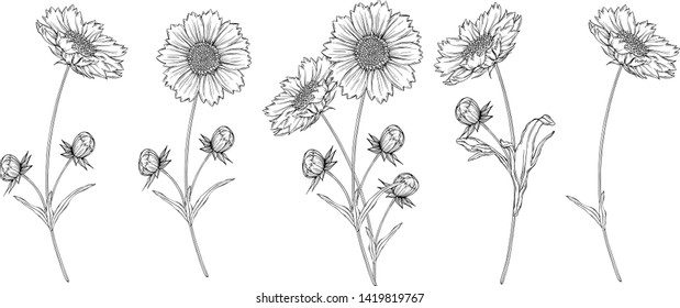 vector black and white contour flower arrangement with chamomile flowers