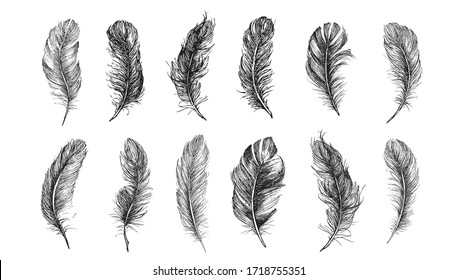 Vector Black and White Feather Pattern