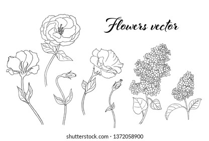 Vector black and white floral illustration with Eustoma flowers and Syringa (Lilac) isolated on a white background