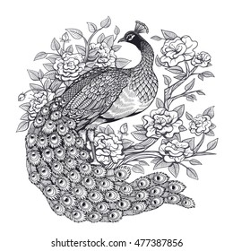 Vector Black and White Floral Peacock Illustration