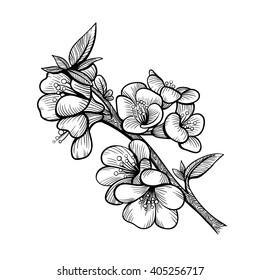 Vector Black and White Flower Branch Illustration