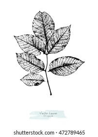 Vector black and white (grayscale) leaves of Ash tree or Walnut tree; stylized as stamp or imprint; rustic or boho style
