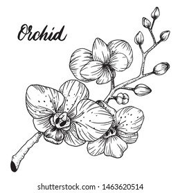 Vector black and white hand drawn pattern with stylized orchid branch. Isolated Ink illustration Perfect cards for any kind of design, birthday and other holiday
