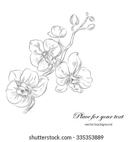 Vector black and white  hand drawn pattern with stylized orchid branch and place for text. Perfect  cards for any  kind of design, birthday and other holiday