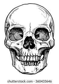 Vector black and white illustration of  human skull with a lower jaw in ink hand drawn style.