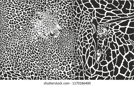vector black and white illustration of leopard and giraffe