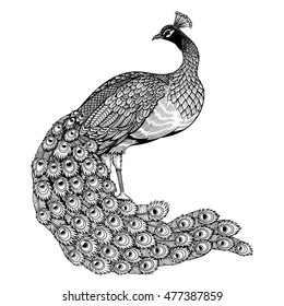 Vector Black and White Peacock Illustration