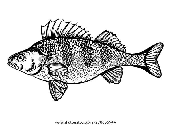 Vector Black and White Perch Fish Illustration