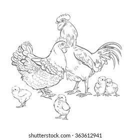 Vector Black and White Sketch Chicken Rooster Illustration