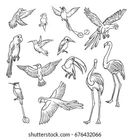 Vector black and white sketch set drawn by hand. Collection of exotic tropical birds. Isolated outline drawing a variety of flamingos, parrots and hummingbirds in flight and on the branch.