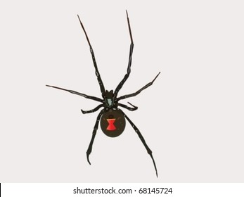 Black Widow Spider Drawing Images Stock Photos Vectors