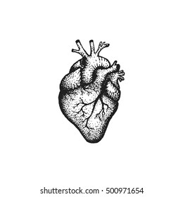 vector black work tattoo dot art hand drawn engraving style anatomical heart illustration isolated white background
