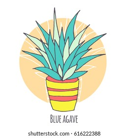 Vector blue agave illustration, hand drawn sketch set with cactus in flowerpot. Mexican style design with desert succulent