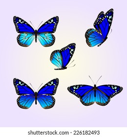 vector of blue monarch butterfly