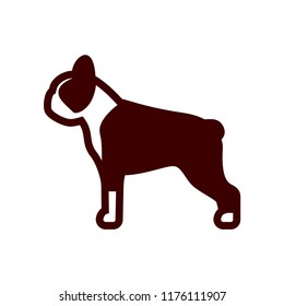 Vector Boston Terrier Dog Icon Isolated On White Background