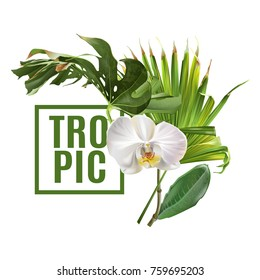 Vector botanical banner with tropical leaves orchid flowers on white background. Design for cosmetics, spa, beautycare products, travel company. Can be used as summer background