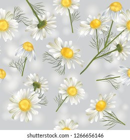 Vector botanical seamless pattern with chamomile flowers. Modern floral pattern for natural health care products, textile, wallpaper, print, gift wrap, greeting or wedding background.