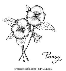 Vector botany illustration - pansy flower in black and white