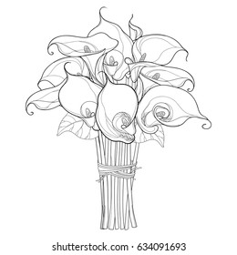 Vector bouquet with Calla lily flower or Zantedeschia with leaves in black isolated on white background. Floral elements in contour style with ornate calla for summer design and coloring book.