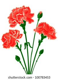 Vector bouquet of Carnations