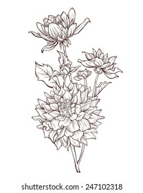 Vector bouquet of dahlia flowers  isolated on white background. Element for design. Hand-drawn contour lines and strokes.
