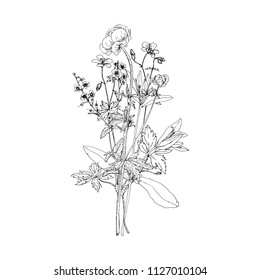 Vector bouquet with drawing wild plants, herbs and flowers, monochrome botanical illustration in vintage style, isolated floral elements