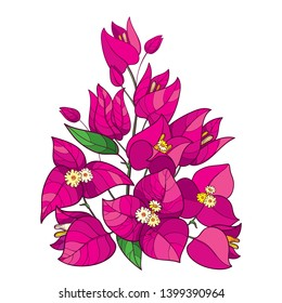 Vector bouquet of outline Bougainvillea or Buganvilla flower with bud in pink and green leaf isolated on white background. Tropical ornate Bougainvillea bunch in contour style for summer design.