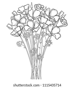 Vector bouquet of outline California poppy flower or California sunlight or Eschscholzia, leaf and bud in black isolated on white background. Contour ornate poppy for summer design or coloring book.