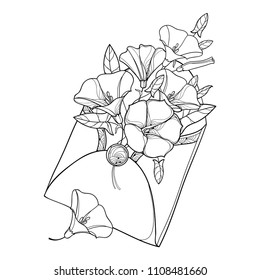 Vector bouquet with outline Convolvulus or Bindweed, ornate leaf and bud in open craft envelope in black isolated on white background. Contour Bindweed flower bunch for summer design or coloring book.