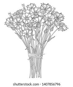 Vector bouquet with outline Cornflower or Knapweed or Centaurea flower, bud and leaf in black isolated on white background. Ornate contour Cornflower bunch for summer design or coloring book.