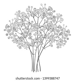 Vector bouquet of outline Gypsophila or Baby's breath flower bunch and bud in black isolated on white background. Ornate contour Gypsophila branch for summer design or coloring book.