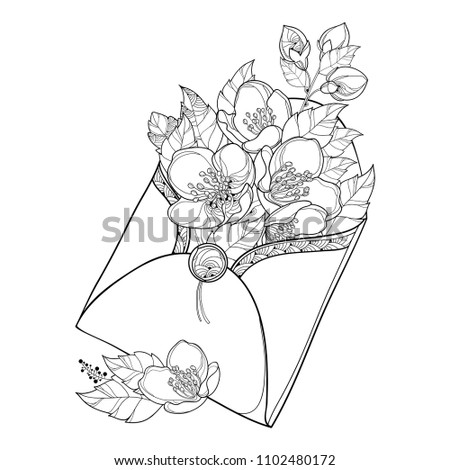 Vector Bouquet With Outline Jasmine Flower Bunch Bud And Ornate Leaf In Black Open