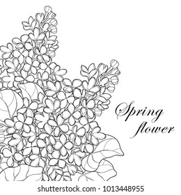 Vector bouquet with outline Lilac or Syringa flower, bud and ornate leaf in black isolated on white background. Corner composition of Lilac bunch in contour style for spring design and coloring book.