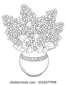 Vector bouquet with outline Lilac or Syringa flower, bud and ornate leaf in black isolated on white background. Lilac bunch in round vase in contour style for greeting spring design or coloring book.