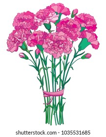 Vector bouquet with outline pink Carnation or Clove flower, bud and green leaf isolated on white background. Ornate carnation bunch for greeting spring design. Mother day symbol in contour style.