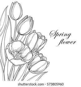 Vector bouquet with outline tulips flowers isolated on white. Ornate floral elements for spring design and coloring book. Corner composition with bunch of tulip flower in contour style