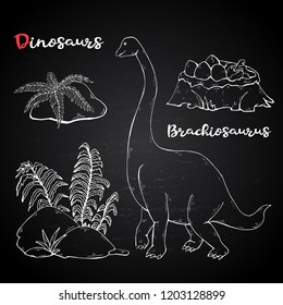 Vector Brachiosaurus with plant and stone on chalk blackboard.Jurassic Wildlife.Wild animals dinosaurus. Ancient animal character.Wild creatures of the Jurassic period.White dinosaurus silhouette.