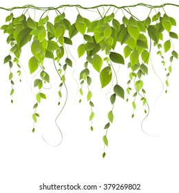 vector branch with leaves isolated on white background