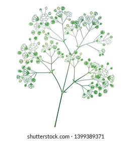 Vector branch with outline Gypsophila or Baby's breath, bud and delicate flower in pastel white and green isolated on white background. Ornate Gypsophila bunch in contour style for summer design.