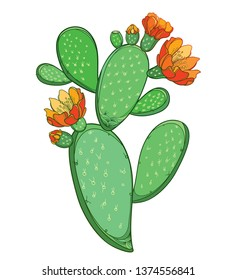 Vector branch of outline Indian fig Opuntia or prickly pear cactus with orange flower and spiny green stem isolated on white background. Ornate blossom Opuntia plant in contour for summer design.