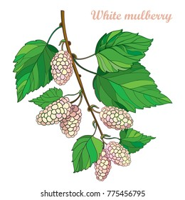 Vector branch with outline Mulberry or Morus with ripe white berry and green leaves isolated on white background. Drawing of Mulberry bunch in contour style for summer design and fresh fruit menu.