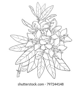 Vector branch with outline Rhododendron or Alpine rose flower in black isolated on white background. Bunch with mountain flowers and leaves in contour style for summer design and coloring book.